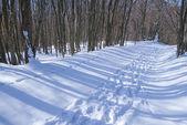 Estrada em uma floresta de inverno — Fotografia Stock