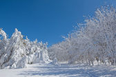 Winter snowbound forest — Stock Photo
