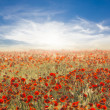 Beautiful red poppy field at the morning — Stock Photo