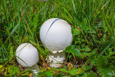 White mushrooms in a green grass — Stock Photo