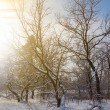 Early morning winter forest — Stock Photo #35426825