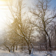 Early morning winter forest — Stock Photo
