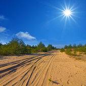 Sandy road through a forest — Stock Photo