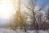 Vroege ochtend winter forest — Stockfoto