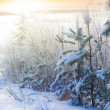 Winter forest at the early morning — Stock Photo