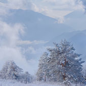 Winter mountain landscape — 图库照片