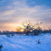 Winter sunset scene — Stock Photo