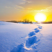 Winter snow desert — Stock Photo