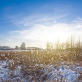 Winter field scene — Stock Photo