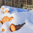 Stock Photo: Snowbound trunks