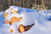 Snowbound trunks — Stock Photo