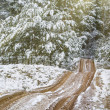 Road through a winter forest — Stock Photo