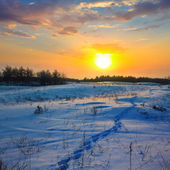 Winter plain sunset — Stock fotografie