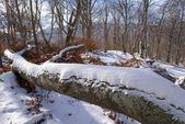 冬の森のシーン — ストック写真
