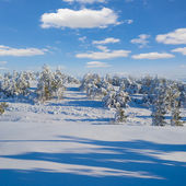 Snowbound pine forest — Stock Photo