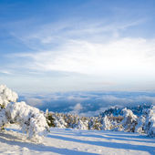 Beautiful winter snowbound forest — Stock Photo