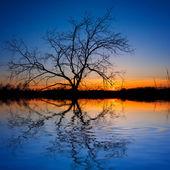 Silhueta de árvore acima de um lago de noite — Fotografia Stock
