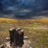 Trocken stumpf in ein Ödland — Stockfoto