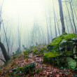 Misty forest — Stock Photo #39630553