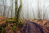 Misty forest scene — Foto Stock