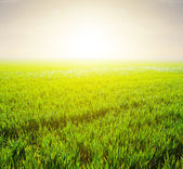 Green fields in a rays of sun — Stock Photo