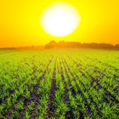 Huge evening sun above green fields — Stock Photo