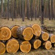 Stock Photo: Heap of pine logs in a forest