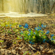 Early spring flowers in a forest — Stock Photo #40201455