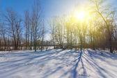 Zimní les slunečný den — Stock fotografie