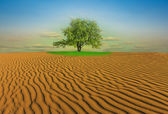 Oasis in a desert — Stock Photo