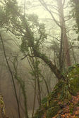 Green forest in a mist — Stock Photo