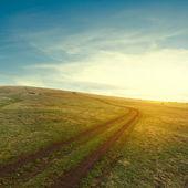 Zelená pole na večer — Stock fotografie