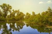 Petit lac par une chaude journée d'été — Photo