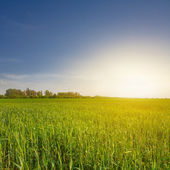 Green fields at the sunset — Stock Photo