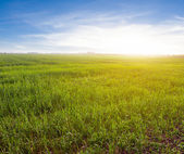 Evening rural scene — Stock Photo