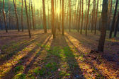 Morning forest scene — Foto de Stock