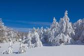 зимний лес и заснеженных — Стоковое фото