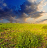 Green fields at the evening — Stock Photo
