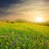 Evening green hills — Stock Photo