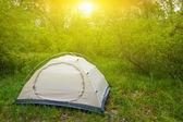 Bílý turistický stan v lese — Stock fotografie