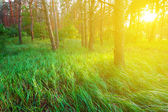 Green forest glade at the evening — Stock Photo