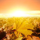 Dry autumn leaves in a rays of evening sun — Stock Photo