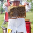 Beekeeper  working in apiary - Stock Photo