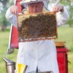 Beekeeper working in apiary — Stock Photo