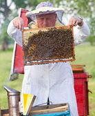 Apicoltore lavorando in apiario — Foto Stock