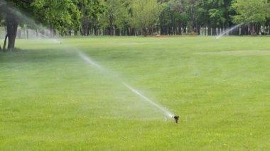 Water sprinkler in the park — Stock Video