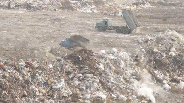 выгрузка мусора грузовик — Стоковое видео