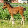 Stock Photo: Beautiful foal