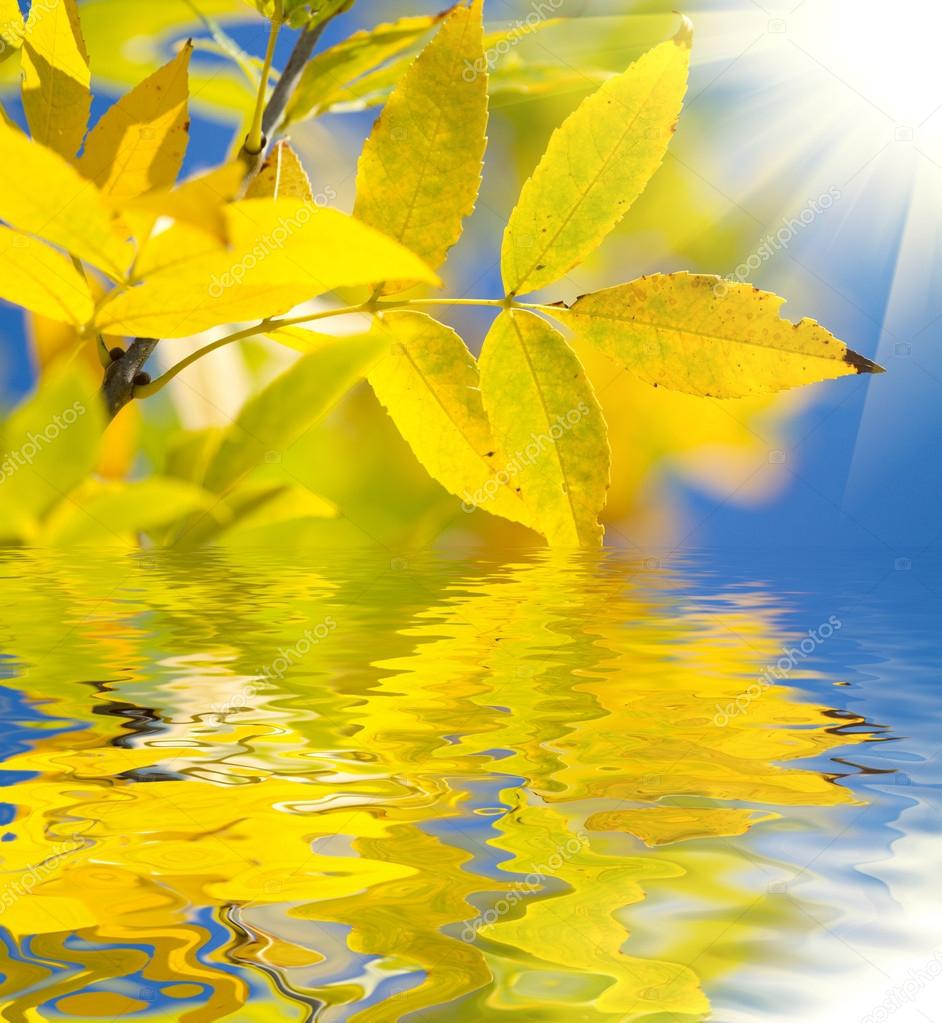 秋天的树叶 — 图库照片08labrador#13518613