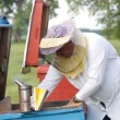 Stock Video: beekeeper working in apiary